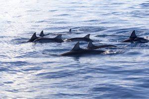 Visiter l'île Maurice nager avec les dauphins
